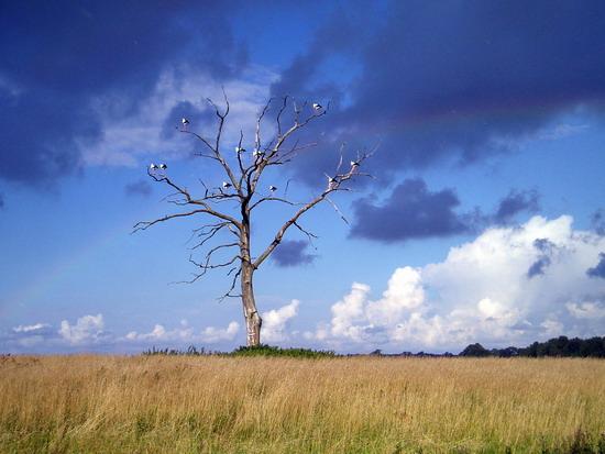 Negyvas gyvybės medis
